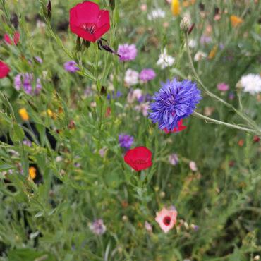 des fleurs pour la beauté